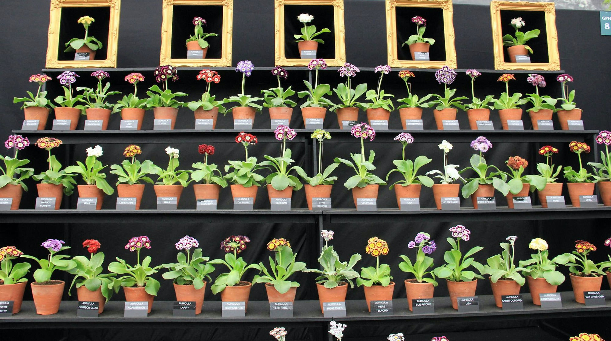 Where To Stay For Chelsea Flower Show An Expert Review The Plum Guide